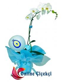 Erkek Bebek İçin Saksı Orkide